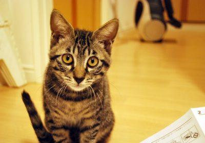 猫の毛をすっきりきれいにする掃除方法と便利でおすすめ掃除グッズ