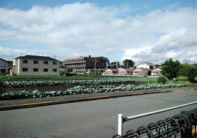 立川市でおすすめの不用品回収業者!口コミ高評価の5社厳選