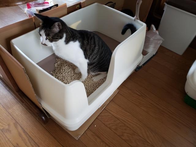 猫が気に入るトイレ