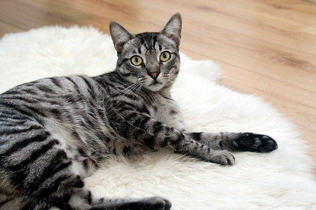 猫はトイレにこだわる!猫も飼い主も快適な猫のトイレとは?