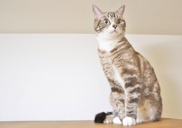 猫がかかりやすい病気TOP3と原因 病気の予防はできる?