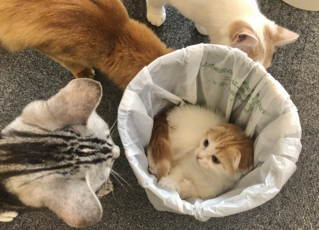 飼い猫がゴミ箱をあさる理由は?いたずらの対策や解決方法まとめ